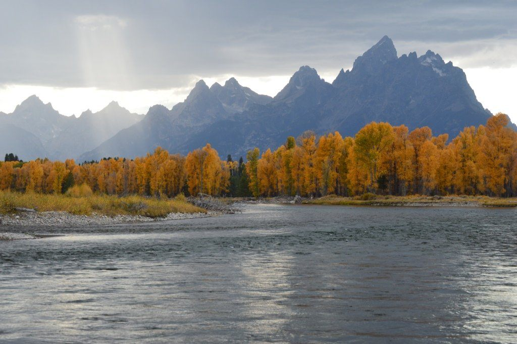 Colored Fall in Grand Teton National Park