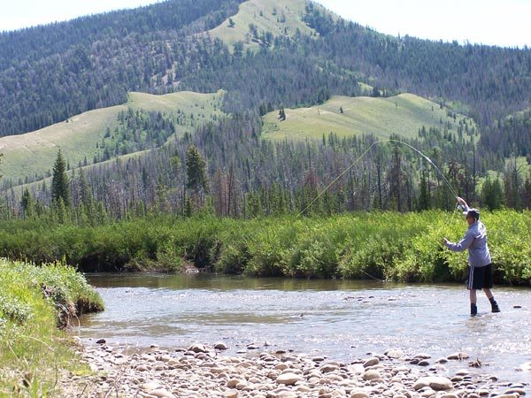 Guided fly fishing trips on Jackson Hole & Yellowstone backcountry creeks