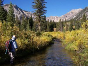 Fly Fishing Wyoming - Backcountry Wade Fishing