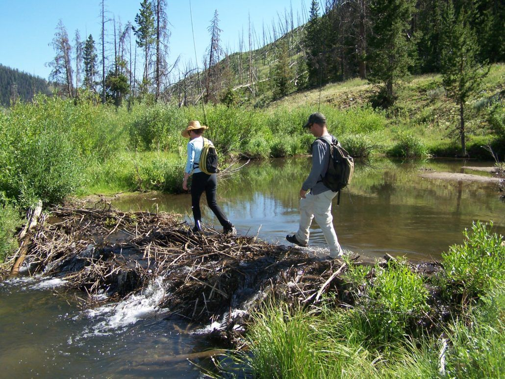 Beaver dam fly fishing report all the best fish in 2018 for Beaver lake fishing guides